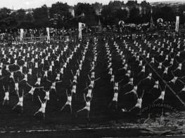Gymnastic Performance at Dynamo Stadium